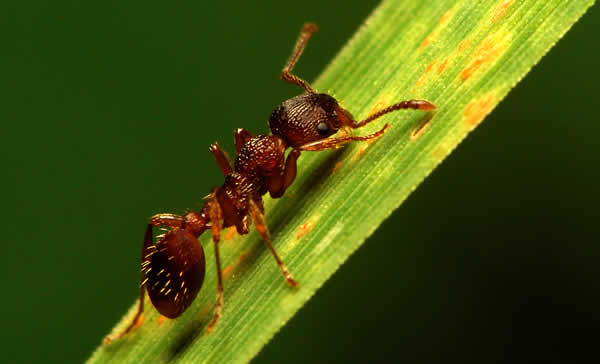 Ameisen Bekampfen Ameisen Ausrotten Im Garten Und Haus Und