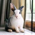 10 trucs à connaître pour avoir des lapins