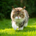 Katzen aus dem Garten vertreiben: alle friedlichen Mittel im Überblick