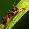 Détruire les fourmis de différentes manières