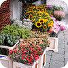 Quelques astuces pour une plus longue conservation des bouquets