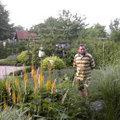 Geeignete Gartenpflanzen wählen