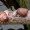 Schnecken: Arten, Schaden und Bekämpfung oder Vorbeugung im Garten