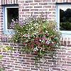 10 Tipps für ihre Terrassen-, Patio-, Balkon- und Kübelpflanzen