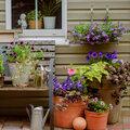 10 astuces pour vos plantes de terrasse, de balcon, de patio...