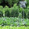 Que faire dans le jardin potager en août?