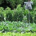 Le jardin potager en août
