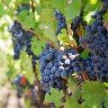 Monat 10 - Oktober: der Weinmonat