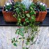 Bumenkästen mit winterfesten Pflanzen füllen
