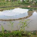 Pour ou contre un étang de nage au jardin?
