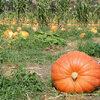 Monat 09 - September: der Herbstmonat