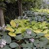 Feste Pflanzen, die gut im Schatten gedeihen