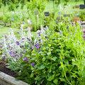 Juillet, synonyme de détente au jardin