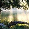Brouillard humide en septembre