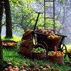 Octobre au jardin, du travail en perspective