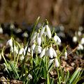 En attendant le printemps...