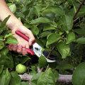 L'été, le moment idéal pour tailler les arbres fruitiers