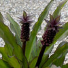 10 plantes exotiques à protéger cet hiver