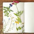 Faire sécher des fleurs de son jardin, mode d'emploi