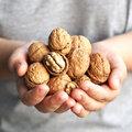 Bien récolter ses noix au jardin