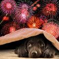 Tenez compte des animaux en cas de feux d'artifice