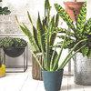 8 conseils pour garder vos plantes d'intérieur en bonne santé