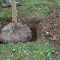 Que choisir? Des plantes à racines nues, en mottes ou en pot?