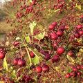 Colorez votre automne avec des fruits décoratifs