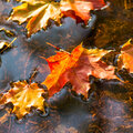 Quels soins apporter à l'étang en octobre?
