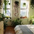 7 plantes pour la chambre à coucher