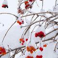 Ces fleurs qui colorent le jardin en hiver
