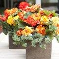 Les plus belles fleurs d'été pour vos bacs à fleurs