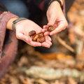 Quelle végétation comestible trouver en septembre et octobre?