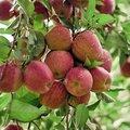 Quatre astuces pour bien conserver les fruits