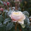 Comment protéger les plantes contre le gel?