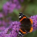 Votre jardin est-il un paradis pour les papillons?