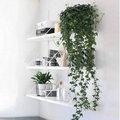 Plantes d'intérieur suspendues et grimpantes