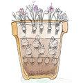 Une lasagne de fleurs pour un printemps plus précoce