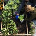 Cultiver de délicieux petits légumes en automne