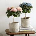 L'hortensia magique fleurit 150 jours