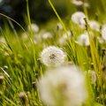 Vivre en harmonie avec les mauvaises herbes