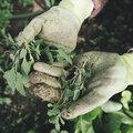 Empêcher et détruire les mauvaises herbes avec Herbistop