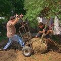 Comment bien transplanter des arbustes et des arbres