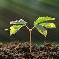 Pour les plantes, mesurer c'est savoir