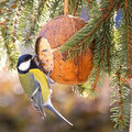 Tipps zur Fütterung von Gartenvögeln