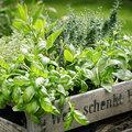 Aménager son jardin aromatique en quelques conseils