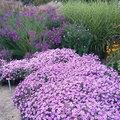 Notre top 6 des fleurs d'automne
