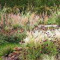 Un jardin de prairie, la bonne idée