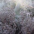 Vos plantes vivaces sont-elles prêtes pour l'hiver?