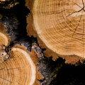 Häufige Fragen beim Kauf von Produkten aus Holz